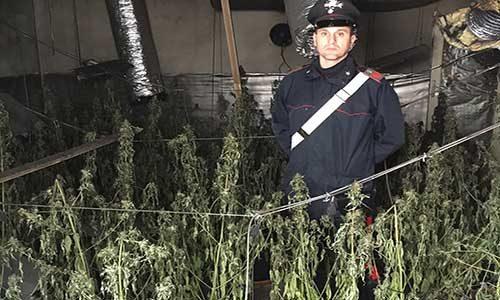 "In fiamme una piantagione di marijuana: un quartiere rischia di ""fumarsela"""