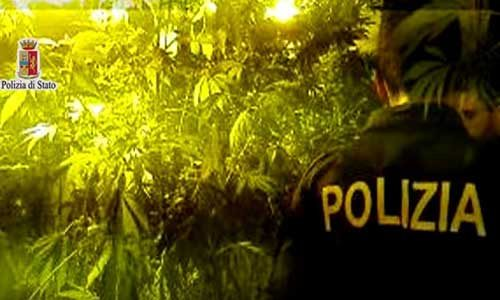"Sequestrata piantagione di marijuana di … ""padre ignoto"""