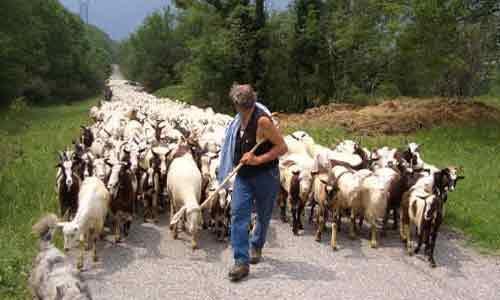 Arrestato pastore che sottraeva energia elettrica con un allaccio abusivo