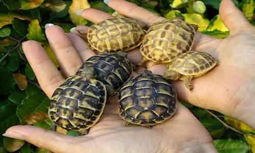 14 tartarughe vive sequestrate ad una donna che le aveva importate illegalmente dalla Tunisia