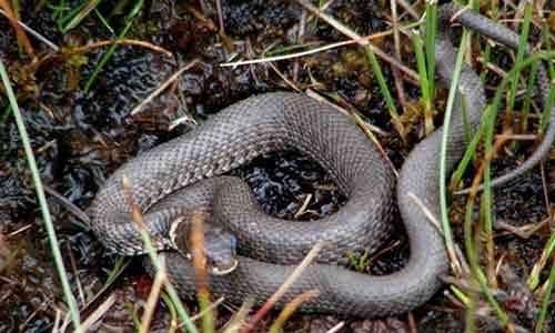Un serpente morde una bimba di 10 anni