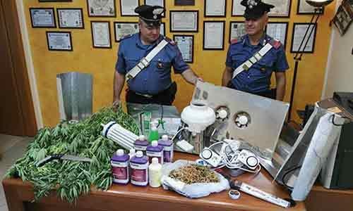 Arrestato un consigliere comunale: coltivava marijuana