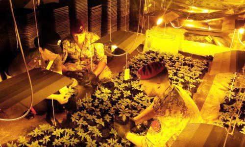 Si erano fatti una  serra di marijuana in casa: arrestati due fratelli