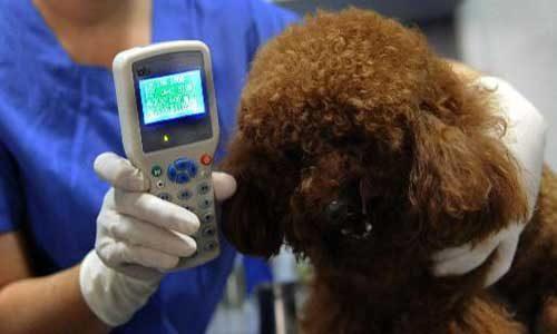 Sciacca. Randagismo: sterilizzazione cani sospesa, perché l'ASP non ha un PC