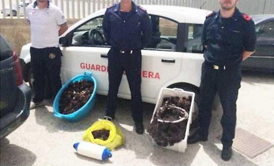 Sciacca. La guardia costiera a porta Palermo sequestra 200 ricci mare e multa di 4.000 euro il venditore ambulante