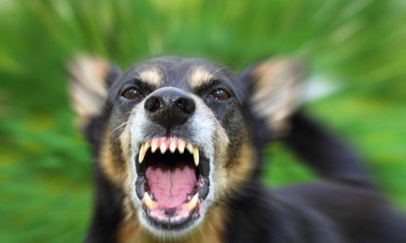 Randagismo 70enne Azzannato Da Un Cane è In Gravi Condizioni