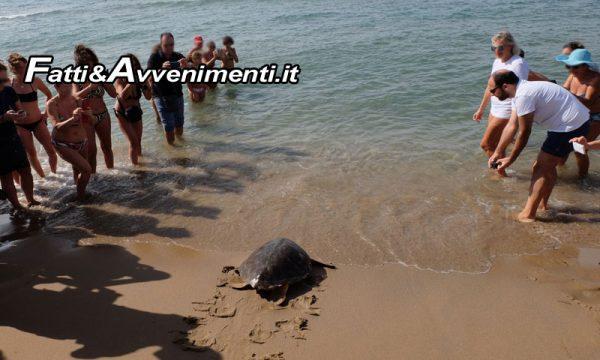 Realmonte. Domani sulla spiaggia di Punta Grande la liberazione di una Tartaruga marina