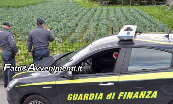 Falsi braccianti agricoli, ma i sussidi erano veri: 64 indagati per truffa, danno da oltre 3milioni di euro per l'INPS