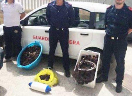 """Cento ricci di mare """"pagati"""" 4 mila euro: beccati pescatori di frodo e scatta la multa"""