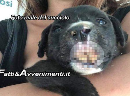 """S. Margherita di Belìce. Cucciolo di cane in fin di vita trovato da volontari: """"E' stato preso a calci o bastonate"""""""