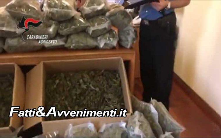"""Naro (Ag). Scoperta maxi piantagione con 30 tonnellate di """"Marijuana"""", 15 milioni il valore: 3 arrestati"""