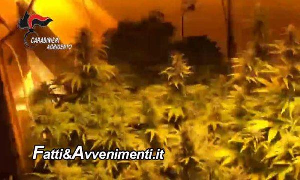 Campobello di Licata. Arrestato 22enne: aveva in casa una serra per la produzione di marijuana