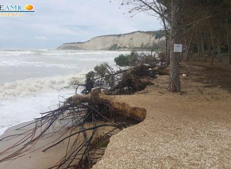"""Eraclea Minoa. La spiaggia aggredita e danneggiata dalla forza del mare che ha """"divorato"""" gli alberi"""