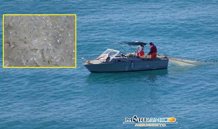 Mare dell'agrigentino sotto attacco: è iniziata la pesca vietata del novellame: arrivano i primi sequestri