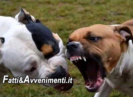 Lampedusa. Donna attaccata e sbranata da 3 cani di un privato: è grave trasferita in elisoccorso