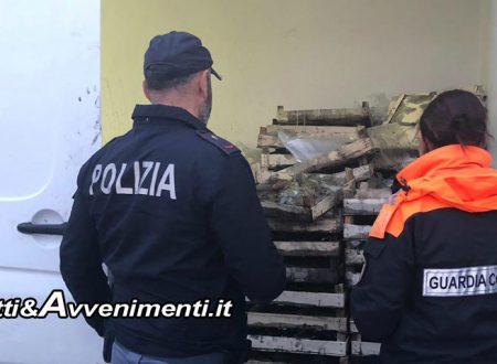 Palma di Montechiaro. Guardia Costiera e Polizia sequestrano 700kg di seppie pescate abusivamente: andranno in beneficenza