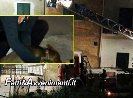 Agrigento. Cagnolino lasciato in balcone per 5 giorni: la Polizia lo salva, extracomunitari denunciati