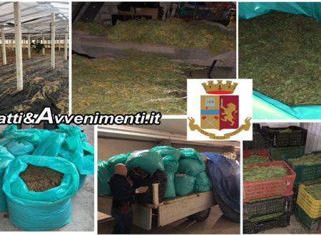 Acate (RG). Sequestrati 770 kg di marijuana per centinaia di migliaia di euro di valore: 4 arresti