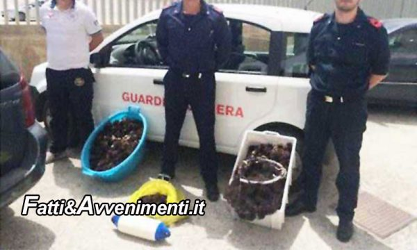 Menfi. La Guardia costiera a Porto Palo sequestra 50 ricci di mare e fa multa di 2000 € a pescatore sportivo