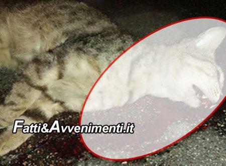 """Canicattì. Romeno uccide e sviscera un gattino: fermato dai poliziotti confessa: """"Volevo mangiarlo"""""""