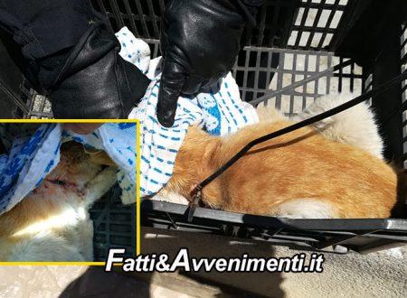 Marsala. Bucano stomaco di un gattino con un tubo di plastica: soccorso, lotta tra la vita e la morte