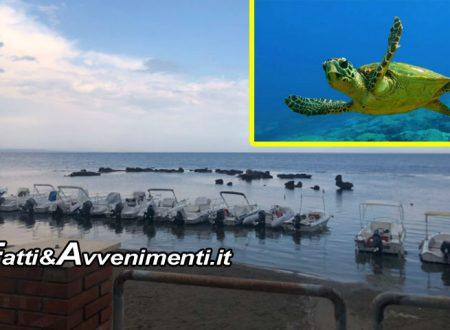 Sciacca, Renella. Ormeggio imbarcazioni impedisce alle Tartarughe di nidificare: WWF e Antonello Nicosia presentano esposto alla Procura