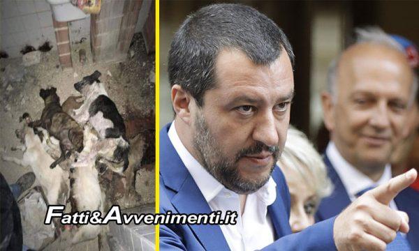 """La mattanza dei randagi siciliani finisce sulla pagina di Salvini: """"Vergognoso, puniremo chi maltratta gli animali"""""""