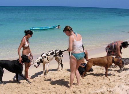 Porto Empedocle. Anche quest'anno la spiaggia libera anche per i cani