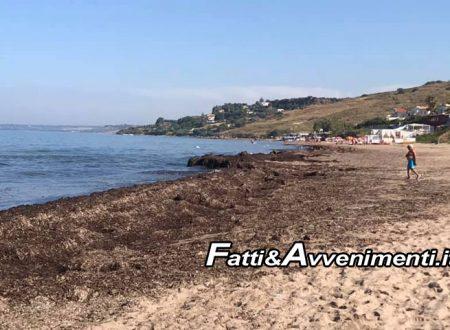 Sciacca. Spiaggia San Marco invasa dalle alghe: Da domani ruspe in azione per rimuoverle