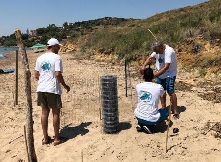 Sciacca. WWF: trovato secondo nido di tartaruga marina sull'arenile di Capo San Marco