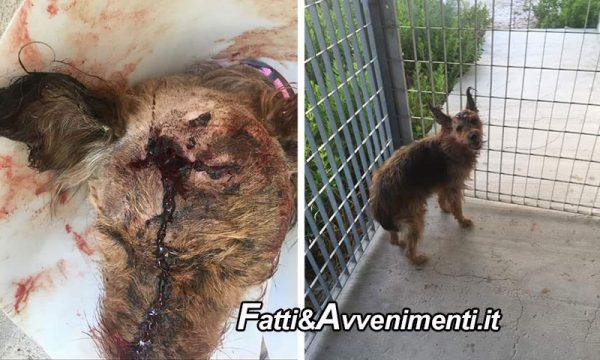 Sciacca. Cagnolina presa a picconate in testa: salvata da volontari, lotta per la vita