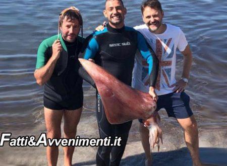 Mazara del Vallo. Appassionato sub pesca un calamaro gigante davanti la costa