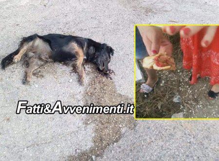 Cattolica Eraclea. Ormai è strage di cani avvelenati nell'indifferenza dell'amministrazione comunale