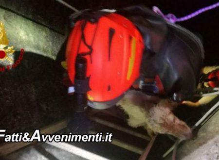 Caltagirone (CT). Cagnolino cade in un pozzo profondo 15 metri: salvato dai vigili del fuoco
