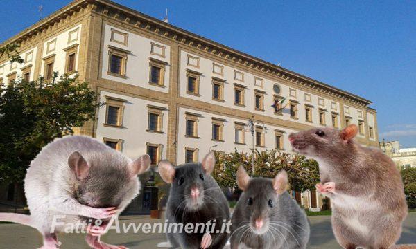 """Sciacca. Centro destra chiede convocazione consiglio comunale: """"troppi topi è emergenza sanitaria"""""""