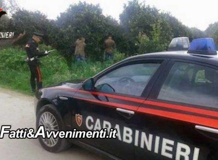 """Porto Empedocle. """"Ripulito"""" un oliveto: rubati 5mila chili di olive, indagano i carabinieri"""