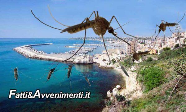 Sciacca invasa dalle zanzare, 3 settimane fa è stata fatta la disinfestazione: ma hanno spruzzato acqua?
