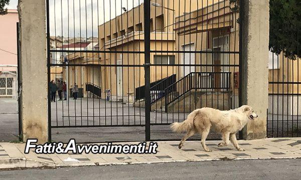 """Ribera. Randagismo, Li Voti e Lupo: """"troppi cani in centro, l'Amministrazione intervenga"""""""