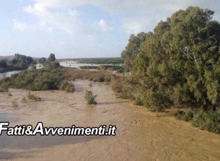 Ribera. Maltempo, il fiume Platani è esondato con danni alle colture, apprensione per il Verdura: le foto