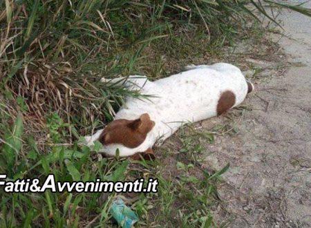 Licata. Ancora una strage di cani: diversi animali avvelenati con micidiali esche