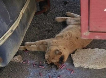 Acquedolci (ME). Gattino ucciso per gioco con i petardi: indagano carabinieri e polizia municipale