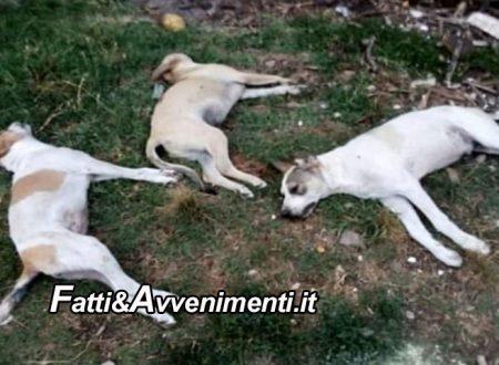 Partinico. Strage di cani in 7 avvelenati: 3 sono morti e 4 ricoverati, la proprietaria in lacrime su facebook