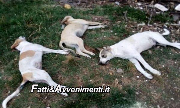 Ribera. È strage di cani con il solito veleno: è caccia agli autori del barbaro gesto