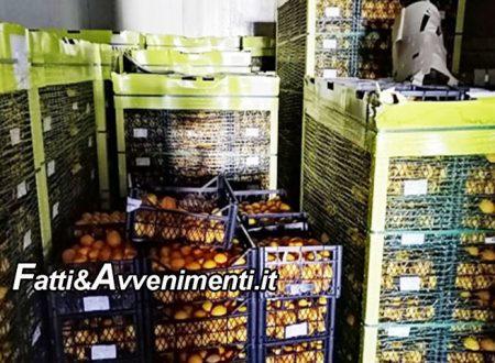 Siracusa. Sequestrati 20mila chili di limoni turchi: non erano idonei al consumo e saranno distrutti