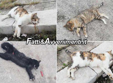 Ravanusa (AG). Avvelenata un'intera colonia di gatti randagi: indagano i carabinieri per risalire ai colpevoli
