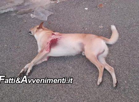 Porto Empedocle. Cane ucciso barbaramente con un colpo di pistola: indagano i carabinieri