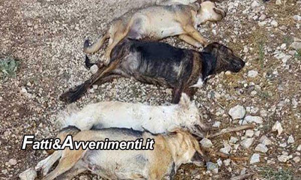 Aragona (AG). Strage di cane: 6 avvelenati: 4 morti, 2 sopravvissuti accolti dall'Associazione Aronne