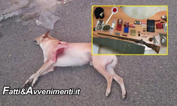 Barrafranca (EN). Spara ed uccide a colpi di pistola il cane del vicino perché abbaia: arrestato 33enne