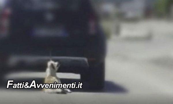 Priolo. Trascina con l'auto un cane legato per le zampe, che muore: pensionato 69enne denunciato