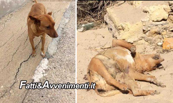 Scoglitti (RG). Cane torturato e ucciso ritrovato su una spiaggia dalla proprietaria che da ieri lo cercava